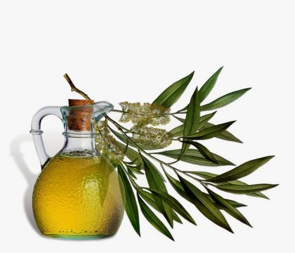 tea tree oil 1 Manfaat Tea Tree Oil